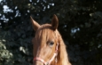 Levante - 2013 Pura Raza Espanola Andalusian horse for sale Spain