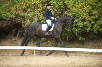 Dressage show Z-DUA and L-DD of Ducado YR