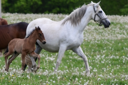 Introducing our new baby horse - Sultana had a beautiful colt - her first son of Dobres
