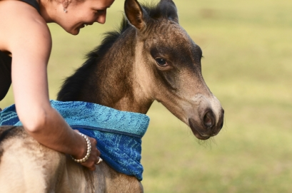 INTRODUCING DUC GEISHA - OUR NEW BABY BUCKSKIN GIRL