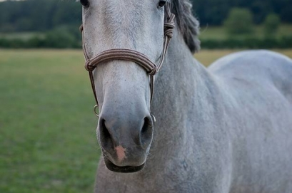 "New photos of ""our"" sold Atento and his story :-)"